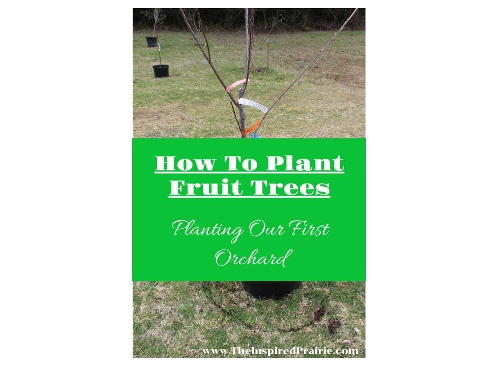How To Plant Fruit Trees- Planting Our First Orchard