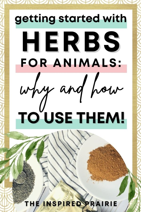 Getting Started with Herbs for Animals: Why and How to Use Them